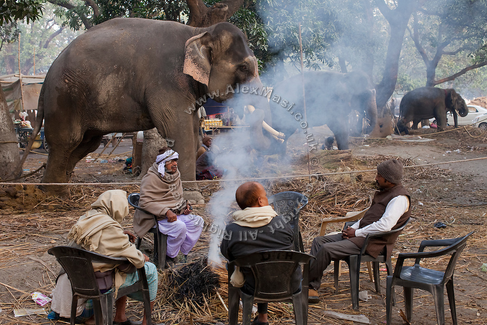 Elephants traders are sitting next to their animals on sale during the yearly Sonepur Mela, Asia's largest cattle market, in Bihar, India.