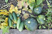 Vegetables from the vegetable garden at Hares Farm. CREDIT: Vanessa Berberian for The Wall Street Journal<br /> UKFARM-Hares Farm