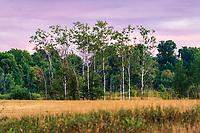 https://Duncan.co/row-of-trees-in-field