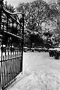 13/01/1963<br /> 01/13/1963<br /> 13 January 1963<br /> Snow scenes from St Arnaud's, Merrion Road, Ballsbridge, Kiliney, and Dun Laoghaire, Co. Dublin. View of snowy garden.