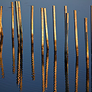 Late afternoon reflections at Blackwater National Wildlife Refuge, a waterfowl sanctuary for birds migrating along the critical migration highway called the Atlantic Flyway. Blackwater Refuge is located on Maryland's scenic Eastern Shore, just south of Cambridge.