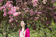 A woman looks at a cherry blossom tree during sunny spring weather in Regents Park in London, England on April 17, 2019.