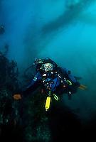 Dr. Sylvia Earle diving in Monterey Bay, California.