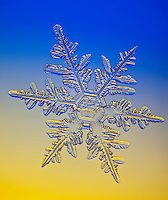 Extreme macro view of a real snowflake photographed in situ through a microscope in Anchorage, Alaska.