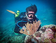 Rope sponge on Molasses Reef, Key Largo, Florida