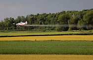 Goshen, New York - A crop duster sprays herbicide while flying over a black dirt onion field on May 21, 2011. The pesticide kills the barley, which was planted with onions in the field to shield the onions from the wind. The barley grows faster but then has to be killed.