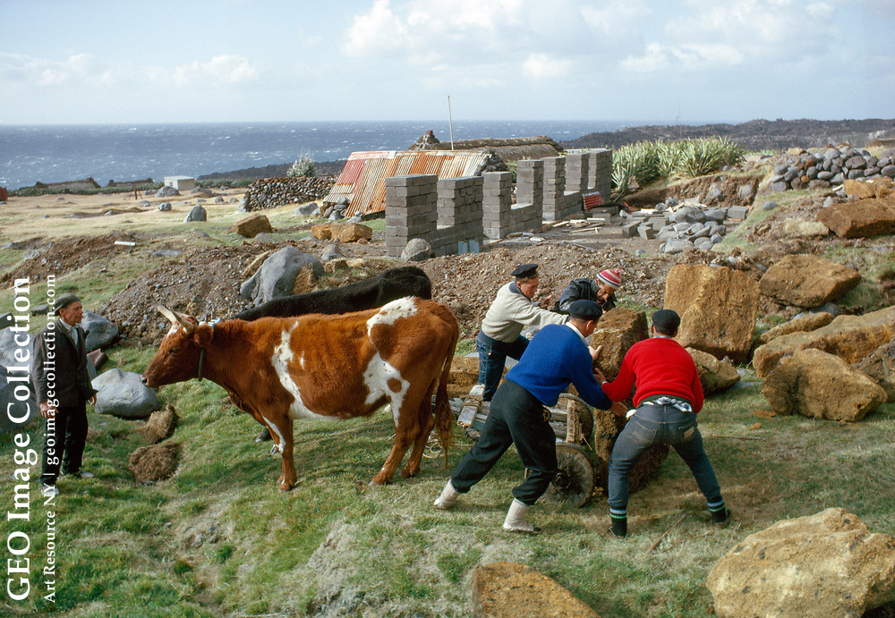 Men unload a new house's gable stone from an ox-drawn cart.
