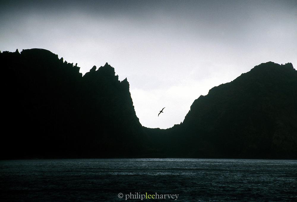 Albatross flying through Neptunes Window at Deception Island, Antarctica