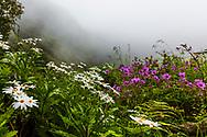 Caldeirao Verde park in Madeira