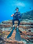 Scuba diver in Socorro Island, MX