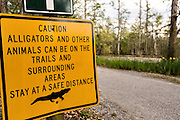 Sign warning visitors of alligators in the blackwater bald cypress and tupelo swamp during spring at Cypress Garden April 9, 2014 in Moncks Corner, South Carolina.