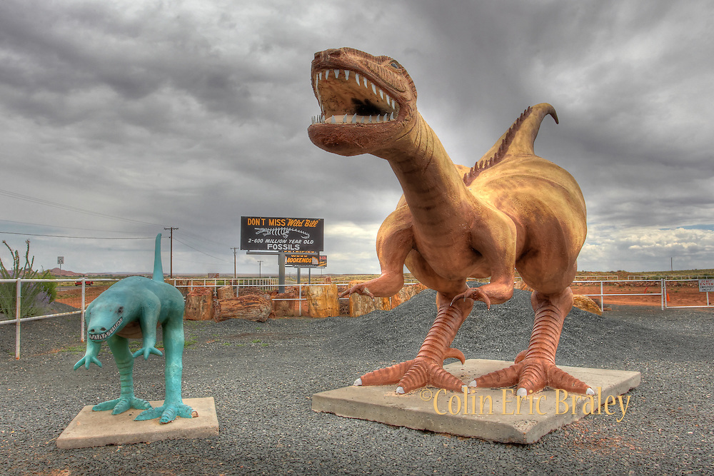 Dinosaur statues tower over the entrance to Jim Gray's Petrified Wood Company near Route 66 in Holbrook, Arizona, Aug. 13, 2011. Colin E Braley/wildwest-media.com