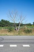 dead tree beside the road