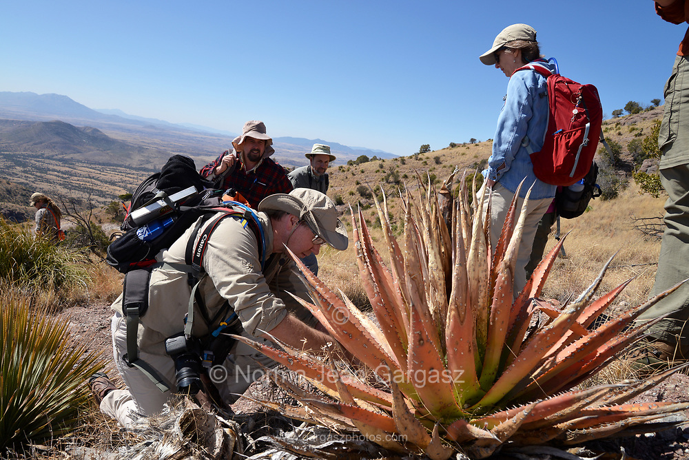 Border BioBlitz, March 3, 2018, Coronado National Memorial, Hereford, Arizona, USA.  Taylor Edwards uses the iNaturalist app to identify a plant species along the Arizona Trail.