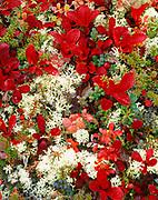 Red leaves of alpine bearberry, Arctostapylos alpina, among lingonberry, Vaccinium vitis-idaea, crowberry, Empetrum nigrum and reindeer lichen, Wickersham Dome, Kantishna Hills, Denali National Park, Alaska.