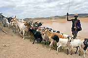 A nomadic pastoralist herds his goats out of the Kaeris water reservoir, which was built by the community with help from Oxfam. The reservoir is about 60m in diameter and is used to store animal drinking water.