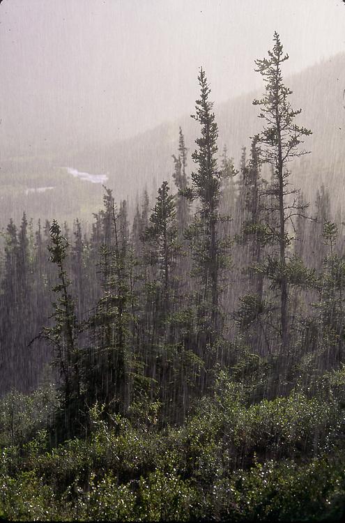 Rainstorm, Kantishna River, Denali National Park, Alaska, USA
