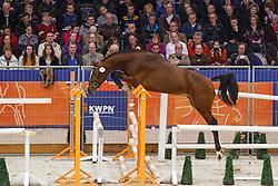 008 - Garezzo<br /> KWPN Stallion Selection - 's Hertogenbosch 2014<br /> © Dirk Caremans