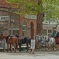 A stage  coach drivers waits to offer rides to tourists in Virginia City, a ghost town that was once the capital of Montana Territory.