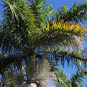 The Treasure Coast Scenic Highway along Fort Pierce, Florida. (AP Photo/Alex Menendez) Florida scenic highway photos from the State of Florida. Florida scenic images of the Sunshine State.