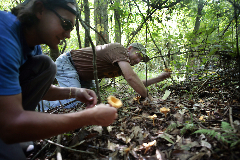 Chef Donald Link forages for edible mushrooms.