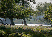 © Licensed to London News Pictures. 18/09/2014. Richmond, UK A man walks a dog through Richmond Park, today 18th September 2014, in the warm weather. Photo credit : Stephen Simpson/LNP