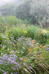 Misty morning in the brick garden at Glebe Cottage with aster and Crocosmia x crocosmiiflora Solfatare in the foreground
