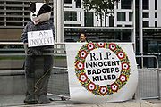 An animal rights activist dressed as a badger protests outside the Home Office and DEFRA against the culling of badgers on 26th August 2021 in London, United Kingdom. More than 100,000 badgers have been killed in culls stretching from Cornwall and Cumbria since 2013 with the intention of reducing bovine tuberculosis bTB infections in cattle, but vaccination will replace such culls, which will no longer be permitted in England, with effect from 2022.