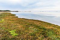 Salt Marshes on the Heuningnes River Estuary,  De Mond Nature Reserve, CapeNature, Western Cape, South Africa