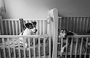 Cabezon and Osito, two paralyzed dogs, rest in their cribs at Milagros Perrunos shelter for disabled dogs in Lima, Peru.