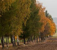 10.2013 Jesienne pejzaze w okolicy wsi Bohoniki w woj podlaskim fot Michal Kosc / AGENCJA WSCHOD
