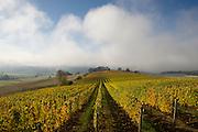 Saffron Fields Vineyards, Willamette Valley, Oregon