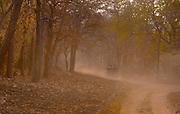 Game drive in Tadoba Andhari Tiger Reserve (Tadoba National Park), Maharashtra, India.