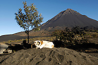 12 JAN 2006, FOGO/CAPE VERDE:<br /> Ein Hund schlaeft auf einem Sandhaufen in der Sonne, in Bangaeira in der Cha das Caldeiras, am Fusse des Pico de Fogo, Fogo, Kapverdischen Inseln<br /> A Dog ist sleeping on a hill of sand in Bangaeira into the Cha das Caldeiras, near the Pico de Fogo, Island Fogo, Cape verde islands<br /> IMAGE: 20060112-01-053<br /> KEYWORDS: Travel, Reise, Natur, nature, cabo verde, Dritte Welt, Third World, Kapverden