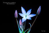 Ultraviolet Light Flowers