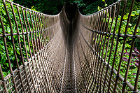 The Longest Rope Bridge in the  at the Lost Gardens of Heligan The UK's only outdoor Jungle by Brian Jordan