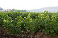 Sula Wines, Nashik, Indien <br /> COPYRIGHT 2009 CHRISTINA SJÖGREN<br /> ALL RIGHTS RESERVED