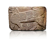 Phrygian relief sculpted orthostat stone panel Andesite, Atateirk Orman ciftligi, Ankara, 12OO-700 B.C. Anatolian Civilisations Museum, Ankara, Turkey.<br /> <br /> Winged griffin with a bird's head and a lion's body. There is a bird's head at the end of its tail. The chest was processed like fish scales. Its wing extends along the body. Muscles in its legs are schematic. <br /> <br /> Against a white background. .<br /> <br /> If you prefer you can also buy from our ALAMY PHOTO LIBRARY  Collection visit : https://www.alamy.com/portfolio/paul-williams-funkystock/phrygian-antiquities.html  - Type into the LOWER SEARCH WITHIN GALLERY box to refine search by adding background colour, place, museum etc<br /> <br /> Visit our CLASSICAL WORLD PHOTO COLLECTIONS for more photos to download or buy as wall art prints https://funkystock.photoshelter.com/gallery-collection/Classical-Era-Historic-Sites-Archaeological-Sites-Pictures-Images/C0000g4bSGiDL9rw