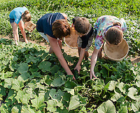 Little Growers programs keep children involved in the farming process at Moulton Farms in Meredith.  (Karen Bobotas/for the Laconia Daily Sun)