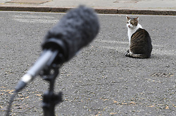 Larry the cat outside 10 Downing Street, London, as the cabinet meets.