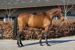 Sabatini van't Klavertje Vier<br /> Stal de Muze - Sint Niklaas 2021<br /> © Hippo Foto - Dirk Caremans<br /> 20/03/2021