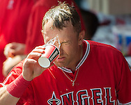 Cliff Pennington cools off with a glass of water to the face before the Angels' preseason game against the Chicago Cubs at Angel Stadium Sunday.<br /> <br /> <br /> ///ADDITIONAL INFO:   <br /> <br /> angels.0404.kjs  ---  Photo by KEVIN SULLIVAN / Orange County Register  --  4/3/16<br /> <br /> The Los Angeles Angels take on the Chicago Cubs at Angel Stadium during a preseason game at Angel Stadium Sunday.<br /> <br /> <br />  4/3/16