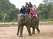 Two female Lao tourists riding an Asian elephant with the mahout (handler) at the annual Sayaboury elephant festival, Sayaboury province, Lao PDR. Originally created by ElefantAsia in 2007, the 3-day elephant festival takes place in February in the province of Sayaboury with over 80,000 local and international people coming together to experience the grand procession of decorated elephants. It is now organised by the provincial government of Sayaboury.The Elephant Festival is designed to draw the public's attention to the condition of the endangered elephant, whilst acknowledging and celebrating the ancestral tradition of elephant domestication and the way of life chosen by the mahout. <br /> <br /> Laos was once known as the land of a million elephants but now there are fewer than 900 living in the country. Around 470 of them are in captivity, traditionally employed by a lucrative logging industry. Elephants are trained and worked by a mahout (handler) whose relationship to the animal is often described as a marriage and can last a lifetime. But captive elephants are often overworked and exhausted and as a consequence no longer breed. With only two elephants born for every ten that die, the Asian elephant, the sacred national emblem of Laos, is under serious threat of extinction.