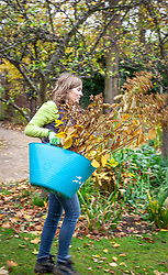 Moving a shrub - hydrangea. Carrying to a new place.