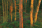 Fading light on the boreal forest<br />Clearwater Provincial Park<br />Manitoba<br />Canada