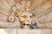Pigeon drinking from water fountain in Piazza Francesco Ferrucci in Radda-in-Chianti, Tuscany, Italy