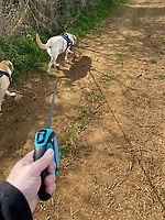 daily exercise walking the dogs  Middleton Cheney nr banbury oxfordshire Photo by Michael Butterworth