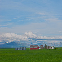 A family farm sits amid wheat fields near Great Falls, Montana. The Highwood Mountains rise in the background.