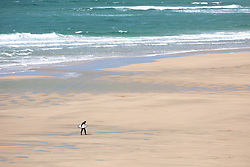 """© Licensed to London News Pictures. 11/05/2020. Newquay, UK. A surfer walks along Fistral beach on the North coast of Cornwall, the day after British Prime Minister Boris Johnson announced a 'road map' to lift lockdown restrictions due to Covid-19, (Coronavirus). A rise in """"staycations"""" - the concept of holidaying in your home country rather than travelling abroad - is expected, with many visitors planning to visit Cornwall. However, an ongoing campaign titled """"#ComeBackLater"""" is trying to persuade tourists not to visit the county until it is safe to do so. Photo credit : Tom Nicholson/LNP"""