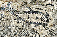 Roman mosaic of a fish. Volubilis Archaeological Site, near Meknes, Morocco .<br /> <br /> If you prefer to buy from our ALAMY PHOTO LIBRARY  Collection visit : https://www.alamy.com/portfolio/paul-williams-funkystock/roman-mosaic.html - Type -   Volubilis    - into the LOWER SEARCH WITHIN GALLERY box. Refine search by adding background colour, place, museum etc<br /> <br /> Visit our ROMAN MOSAIC PHOTO COLLECTIONS for more photos to download  as wall art prints https://funkystock.photoshelter.com/gallery-collection/Roman-Mosaics-Art-Pictures-Images/C0000LcfNel7FpLI